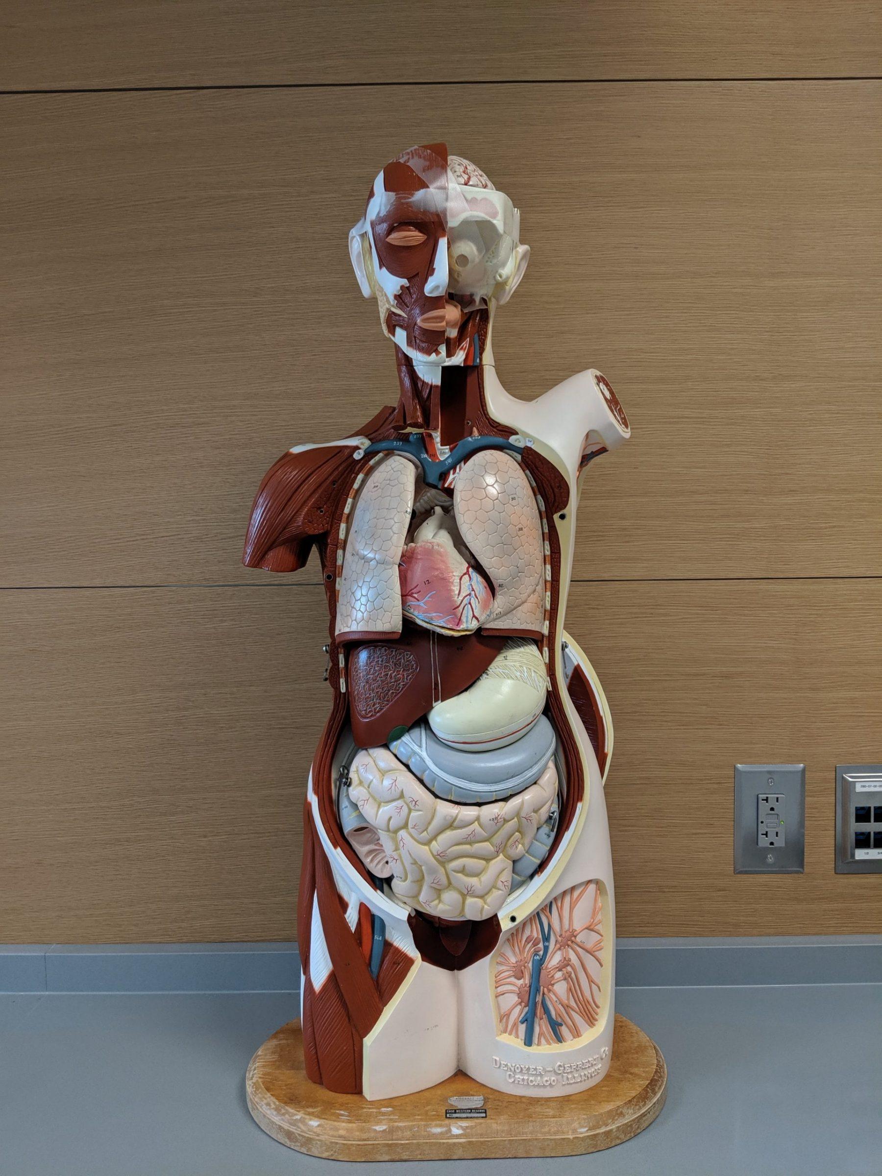 Medical Display body